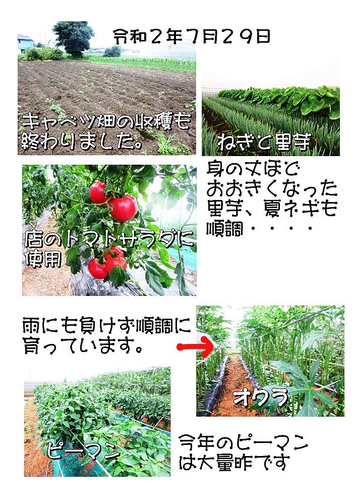 野良仕事2020-07-29イメージ